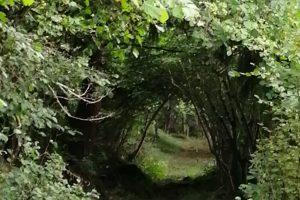 nature3